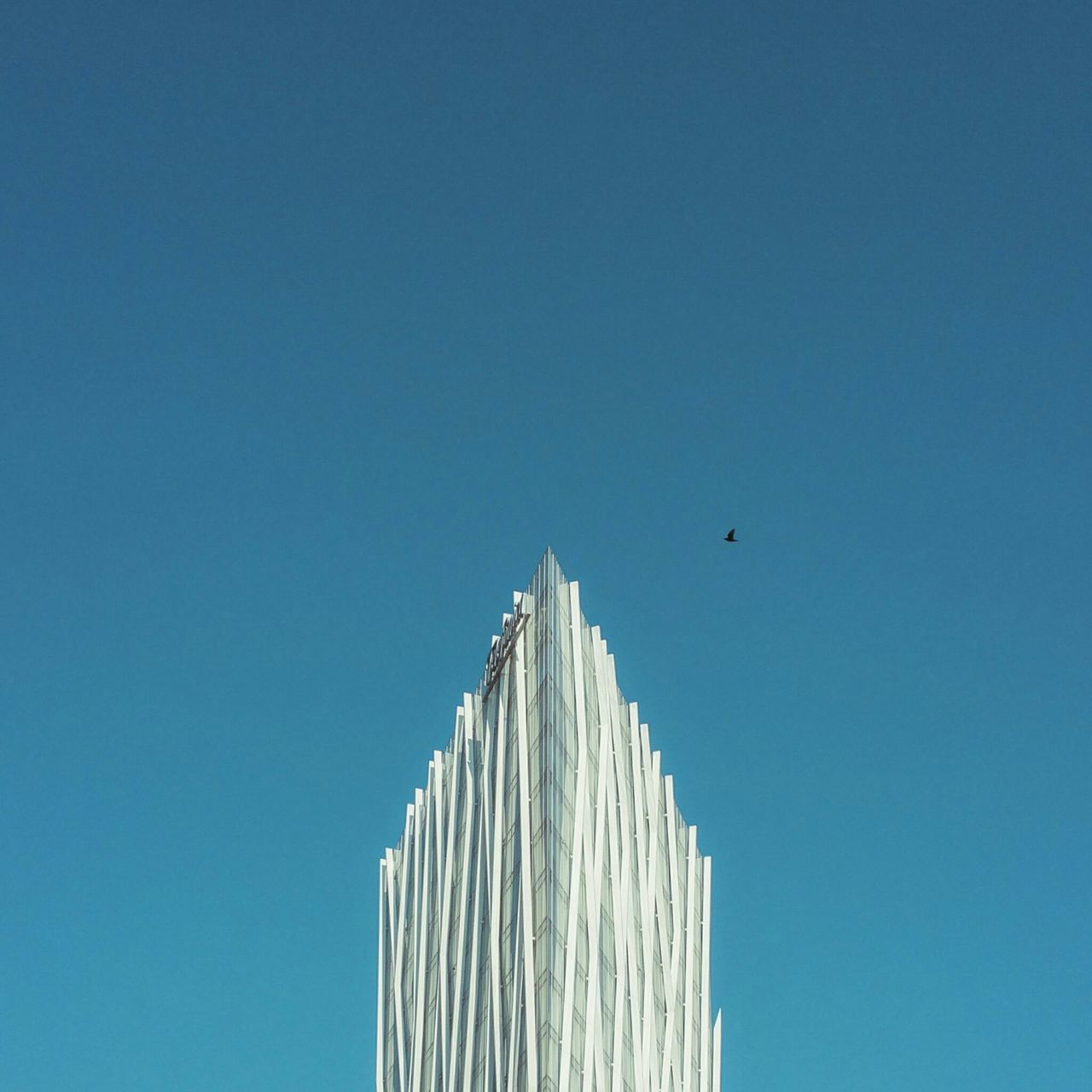low angle view, clear sky, copy space, architecture, built structure, building exterior, outdoors, day, blue, animals in the wild, one animal, no people, bird, flying, travel destinations, animal themes, sky, spread wings, nature