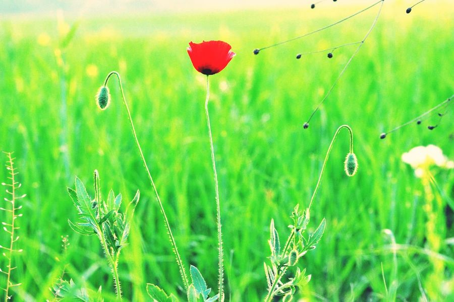 Flowerporn Green Color Beauty In Nature Agriculture Scenics Landscape Grass The Great Outdoors - 2017 EyeEm Awards