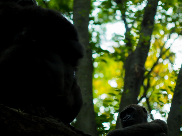 Portrait of monkey in a forest