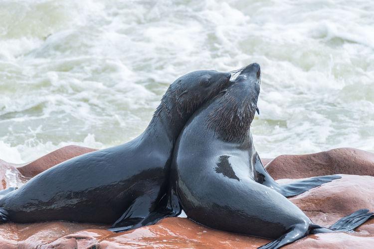 Close-up of seals on rocks