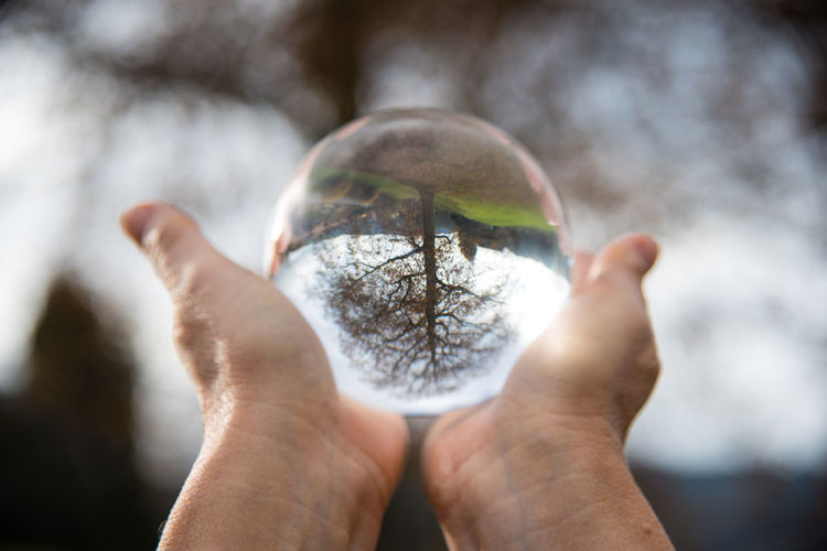 Cropped Image Of Person Holding Crystal Ball With Reflection Of Tree