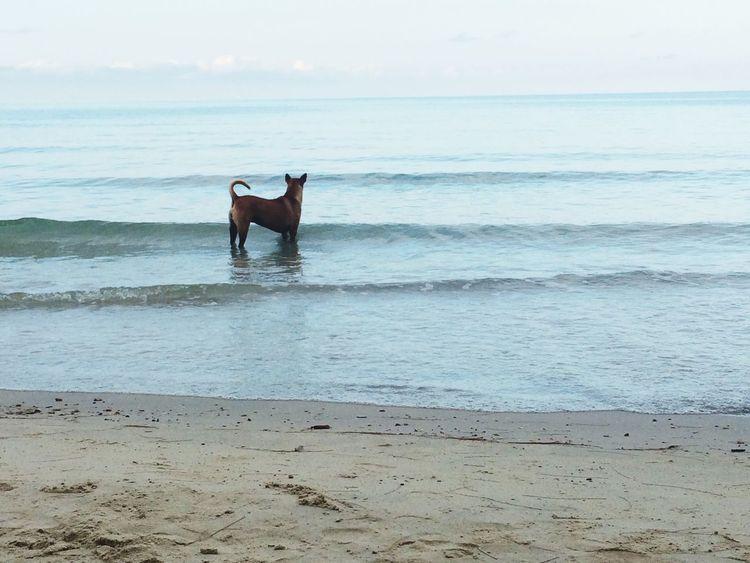 Beach Dog Sky