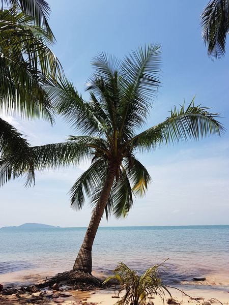 Once a upon a time.. Coconut Trees And Beaches Water Sea Beach Blue Sky Horizon Over Water Postcard The Great Outdoors - 2018 EyeEm Awards