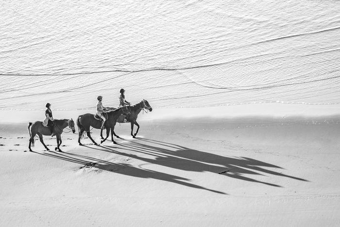 Shadow Riders Raglan Nz Beach Horses Horse Shadows Sand Outdoors Sunlight Riding Sand