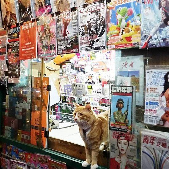 Shanghailife Shanghanese Shanghai_ Shanghai Ig_shanghai_ Ig_cat Ig_catlovers Ig_cats Ig_catclub Ig_catsclub Cat Catstagram Catsofinstagram Cats_of_instagram Catsofig Ig_artistry Ig_gatos Gato Gatos Gatosdeinstagram Gatoslindos