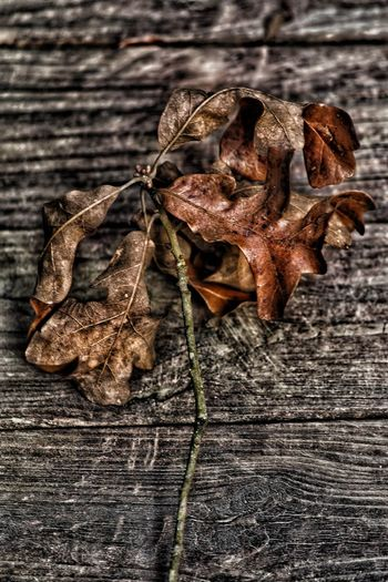 Fallen branch Dry Leaf No People Table Indoors  High Angle View Close-up Dried Plant Day Wilted Plant Fragility Nature