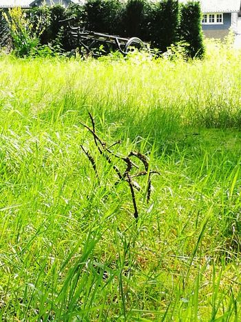 Grass Nature Beauty In Nature Green Color Outdoors Old Transport Ride