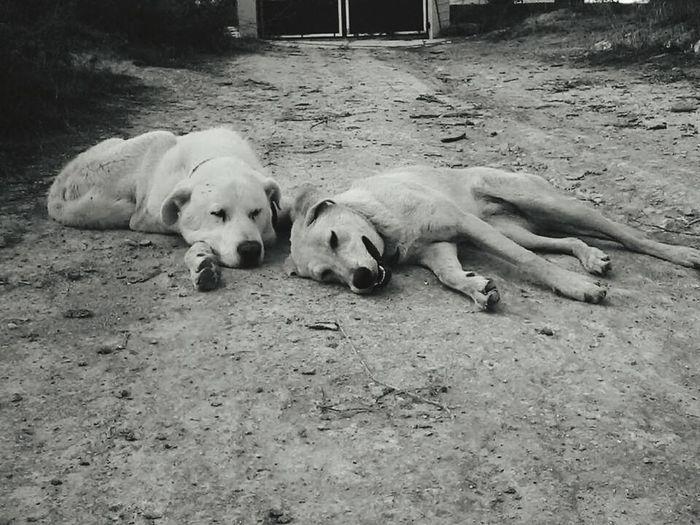 Best friends Tex and Akira