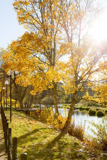 Autumn Autumn Backlight Beauty In Nature Beauty In Nature Day Nature Nature No People Outdoors Scenics Sweden Tree Water