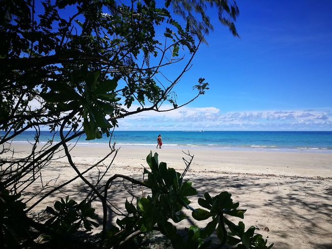 Best place on earth, Australia Flower Beauty In Nature Tree Plant Growth Scenics Sky Day Cairns, North Queensland, Australia Australia Beauty In Nature Tranquil Scene Outdoors Cityscape Nature First Eyeem Photo Architecture City Sunset Reflection. Sea Beach Nature Horizon Over Water Water