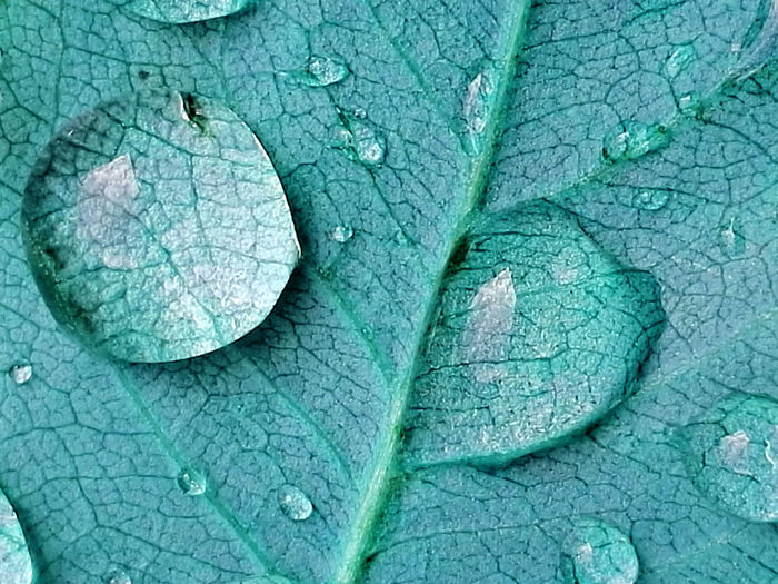 Backgrounds Beauty In Nature Blue Blue Colored Photos Close-up Drops Drops Of Water Effects In Nature Fragility Freshness Full Frame Leaf Leaf Vein Nature No People Plant Textured  Water EyeEmNewHere Circle
