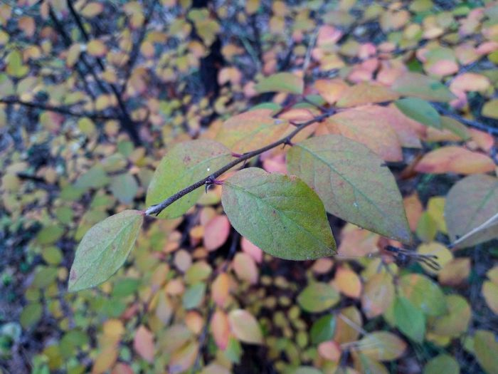 Close-up of leaves on plant during autumn