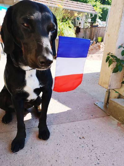 EyeEm France #animal #MyDog Pets Dog