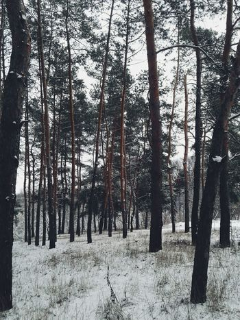 Tree Nature Winter Snow Forest Day Outdoors