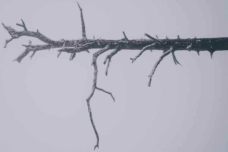 Making the frame Branch Day EyeEm Nature Lover Fog Full Frame Minimalism Nature Nature Photography No People No People, Outdoors Perspective Simplicity Sky Tree Winter Minimalist Architecture Shades Of Winter