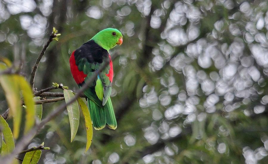 Birds in the wild. Australian Birds In The Wild North Queensland, Australia Beauty In Nature Day Flight Natural Enviroment Nature No People