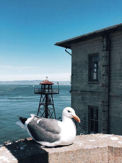 Water Sky Bird