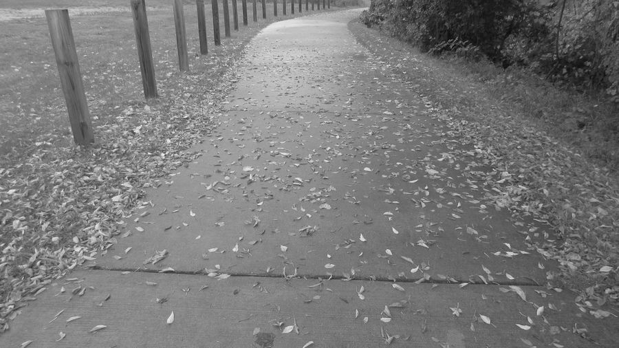 Black And White Photography Pathway To Nowhere Out Walking Taking Photos Begining Of Fall Cadillac Trail Pure Michigan