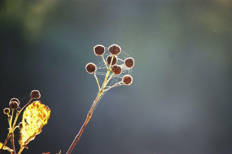 EyeEm Selects Tree Flower Heart Shape Close-up Sky Symbolism