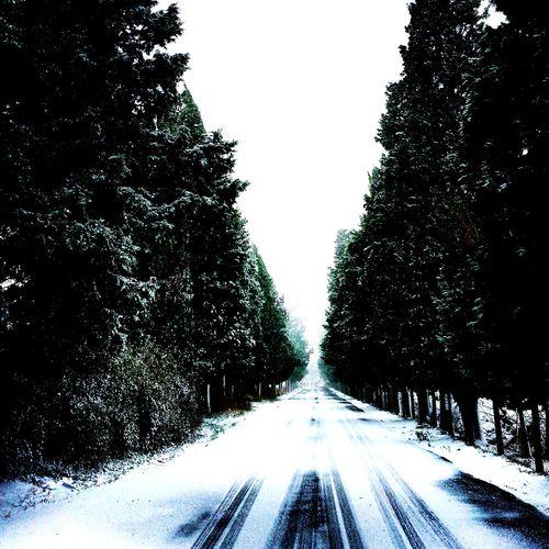 tekirdağ bağcılık araştırmada kış manzaraları winter wievs from viticultural research station tbai tvrs