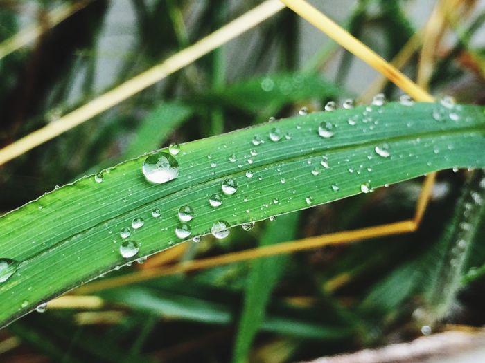 Water Drop Wet