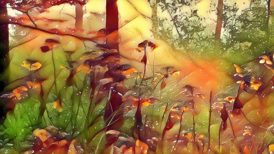 Herfst Filter Kleuren