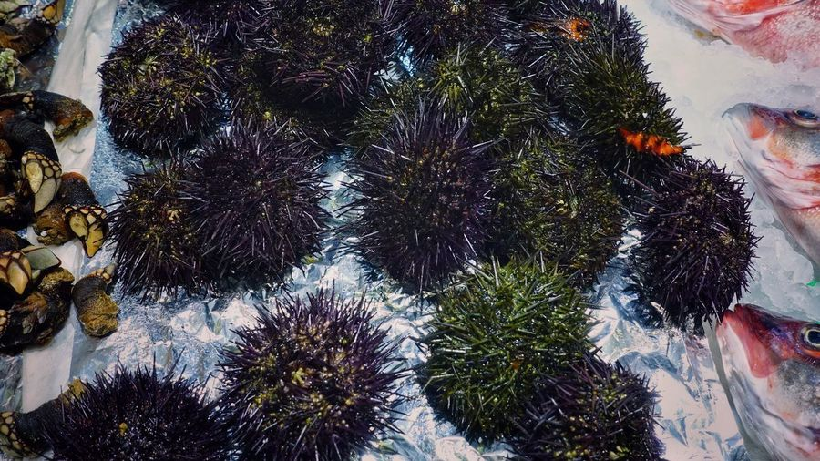 Food Seafood Madrid SPAIN Gourmet Delicious Market Shop Mercado Ocean Cold Temperature Sea Urchin Sea Urchins Beauty In Nature Nature Goose Barnacles Spiny Globular Animals Echinoderms Test Tube Feet Healthy Eating