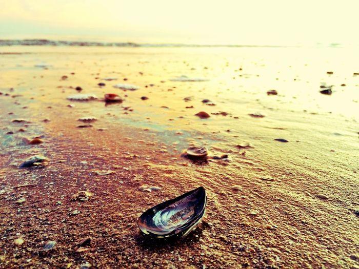Il Mare e i
