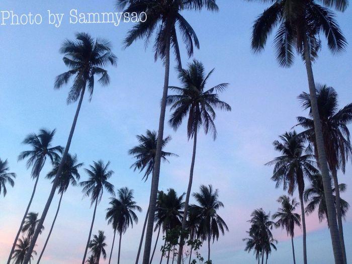 Samui_thailand Kohsamui Samui Island Coconut Trees Evening Light