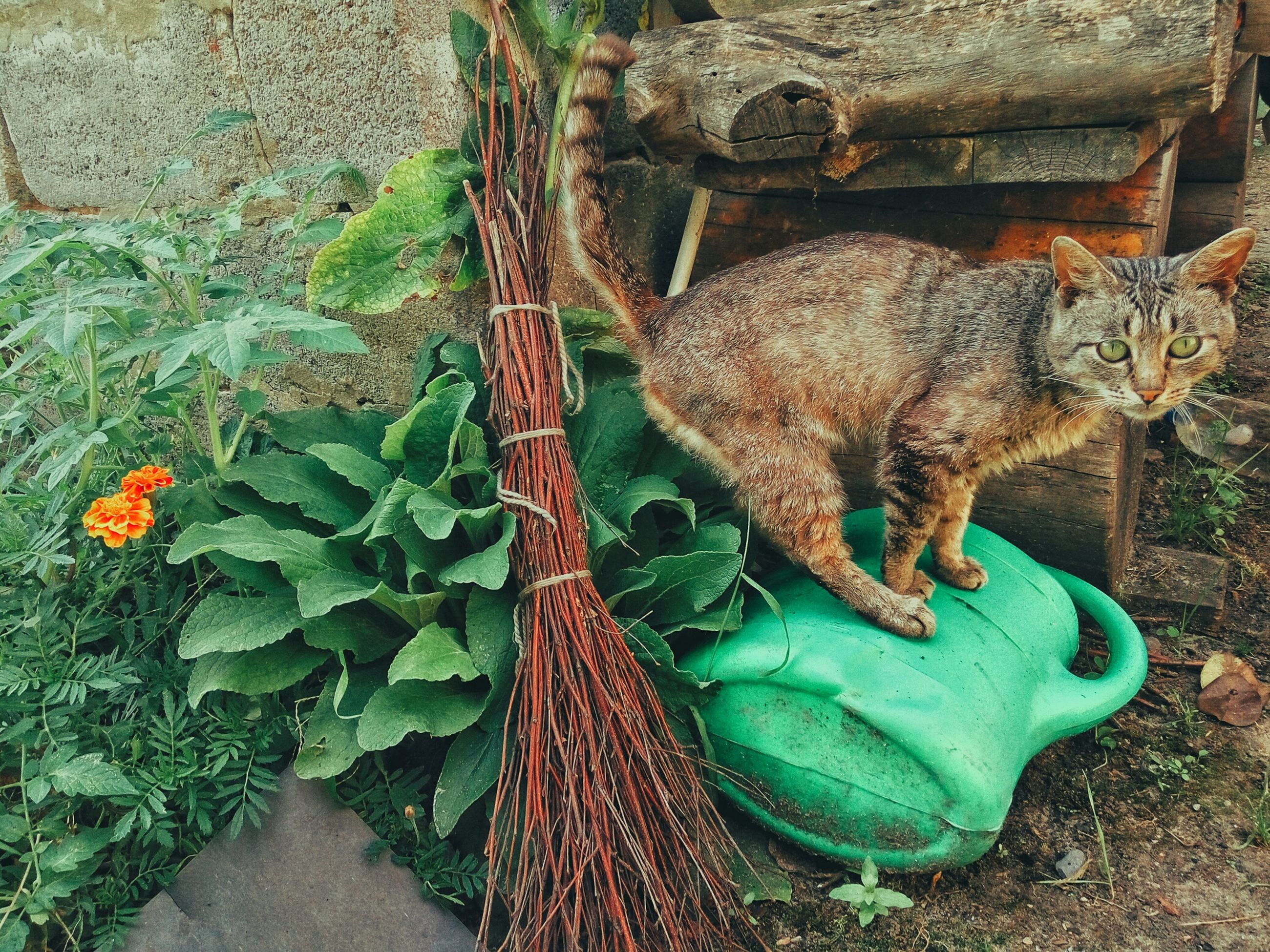 animal themes, mammal, plant, day, outdoors, domestic animals, no people, zoology
