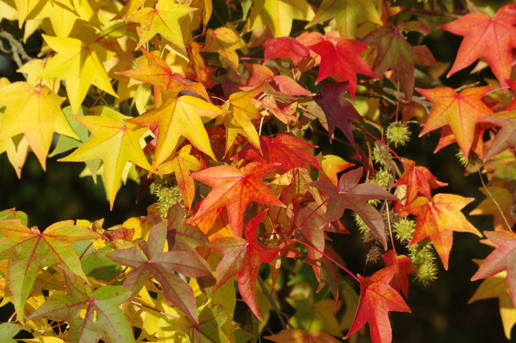 Autumn Leaves Paint The Town Yellow Leaf Leaves Nature No People Yellow