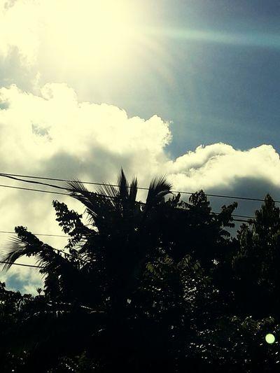cloudy sun shinning sky Tree Silhouette Palm Tree Sky
