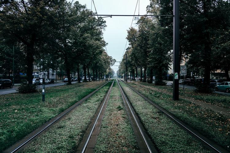 Surface level of railway tracks along trees