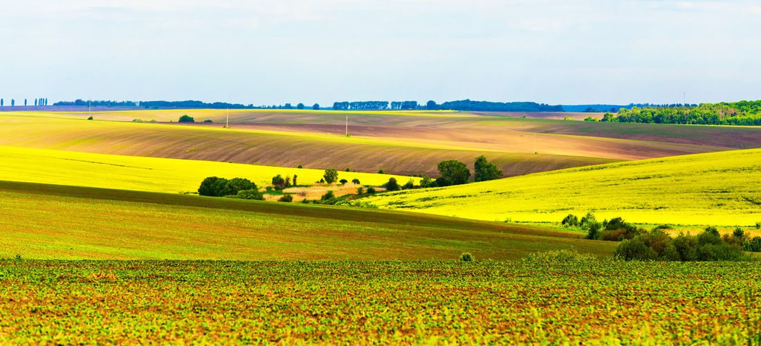 Landscape Environment Land Scenics - Nature Field Tranquil Scene Plant Rural Scene Beauty In Nature Tranquility Agriculture Sky Nature Growth Farm No People Yellow Day Horizon Over Land Flower Outdoors Rolling Landscape Spring Springtime Daylight Fields Rural
