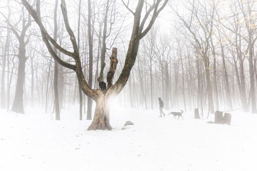 Light reflecting on fog on beautiful tree in foggy forest walking with dog nature winter white landscape background Walking Spooky Journey Forest Wood Elégance Tranquility Weather White Color White Background Backgrounds Nature Walking Dog Foggy Fog Tree Bare Tree Nature Animals In The Wild Winter Animal Themes Animal Wildlife Branch Beauty In Nature Snow Outdoors Cold Temperature Mammal Day