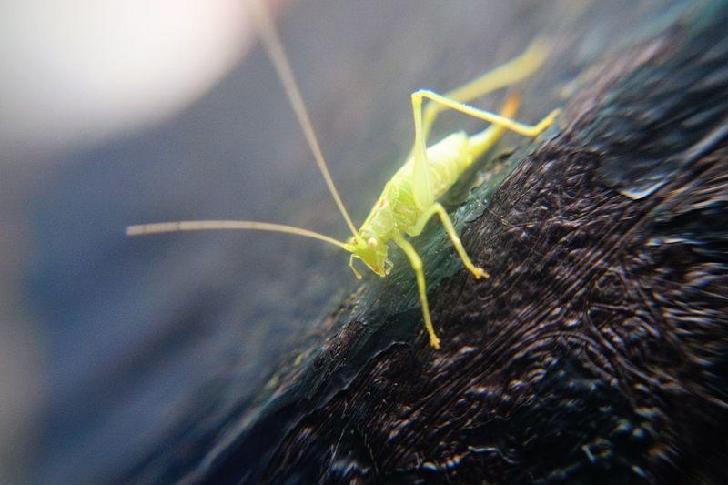 Pequeño gran amigo Bug Still Shot Bug Life Close-up