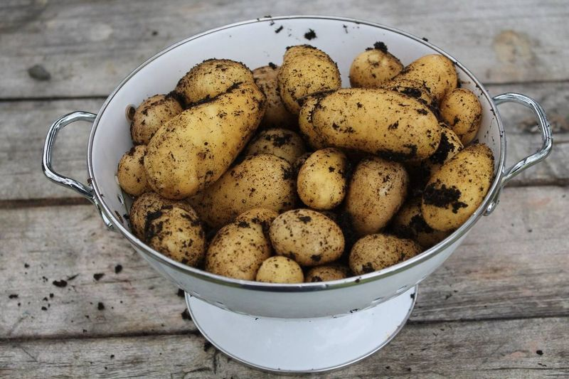 High angle view of raw potatoes in container on wooden table