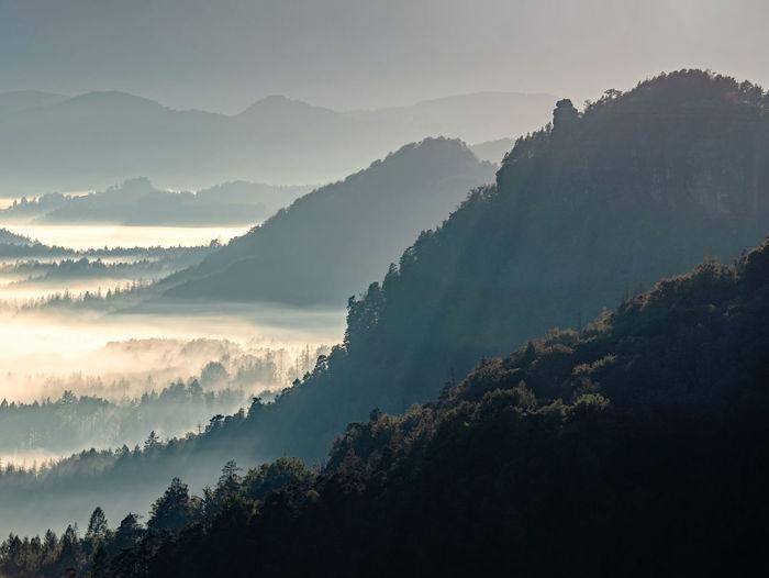 Dark green mountain forest landscape. foggy mountain forest in valley. fantastic misty landscape
