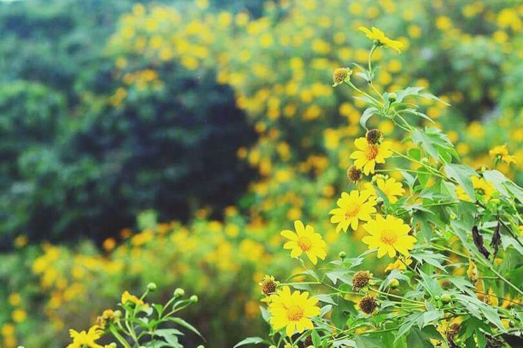 Mùa hoa dại