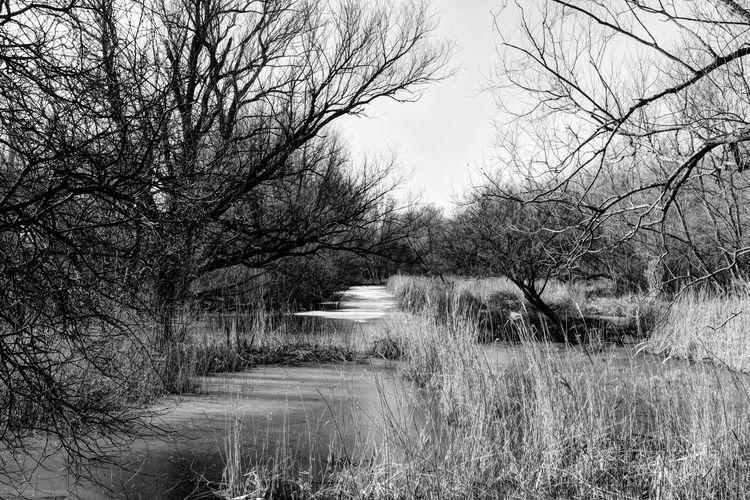 Black And Bright Frozen Monochrome Naked Trees ? Landscape Black&white