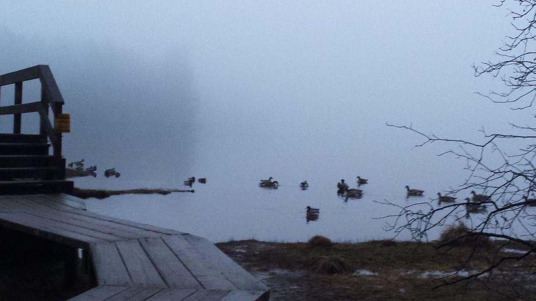 Foggy Morning walk Nature Landscape la Nofilter #birds
