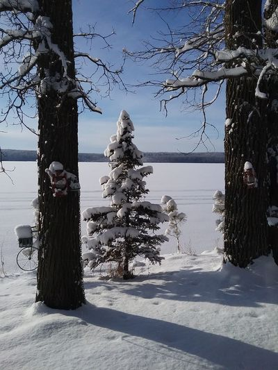 Roy Lake Mn, pic taken Kirk Tree No People Nature Christmas Day Water Beauty In Nature