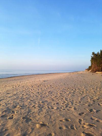 Sunset Sanset Rampage  The San Pine Tree Tree Water Sand Dune Sea Beach Sand Blue Sunny