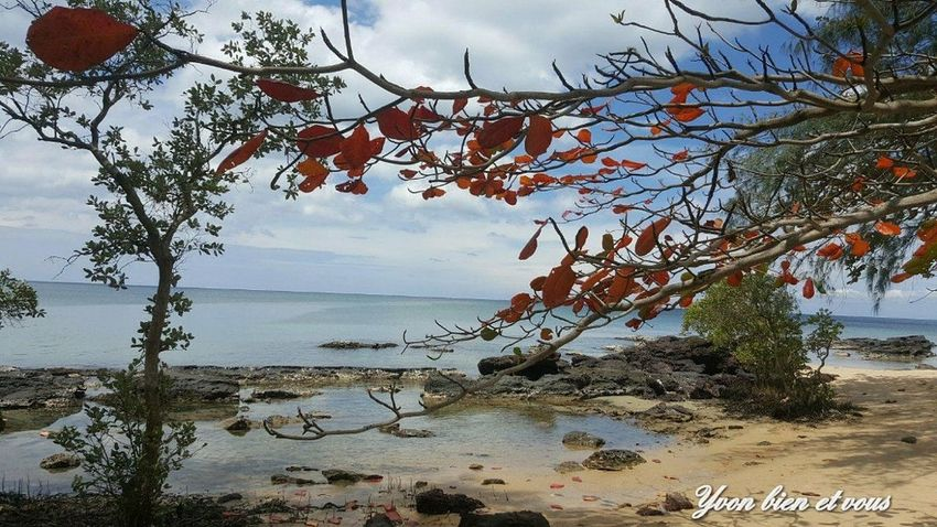 Thailand Iles  Mer Plage Voyage Trip View Colors Vacations Yvonbien View Red Tree Nature Sky Hanging Branch Landscape Beauty In Nature Outdoors Water No People Beach Scenics Sea
