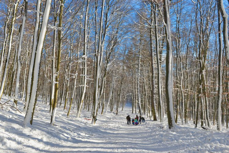 Beauty In Nature Cold Temperature Covering Day Forest Land Leisure Activity Lifestyles Nature Non-urban Scene Outdoors Plant Real People Scenics - Nature Snow Tree White Color Winter WoodLand