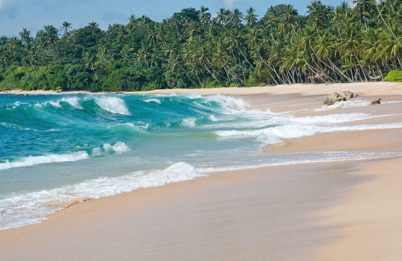 Paradise beach with green turquoise waves, coconut palm trees and fine untouched sand, Southern Province, Sri Lanka, Asia. Coconut Palms Green Pristine Sri Lanka Sunny Beach Beauty In Nature Blue Day Horizon Over Water Motion Nature No People Outdoors Paradise Sand Sandy Scenics Sea Shore Sky Tranquility Tree Tropical Turquoise Water Wave Waves