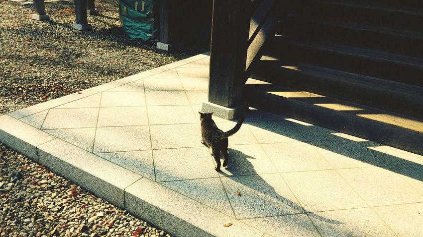Cat Animal Photography F4F L4l