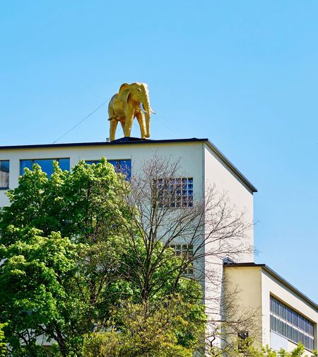 Break The Mold Art And Craft Sculpture Low Angle View Clear Sky Blue Mammal Ladyphotographerofthemonth Bern Elefant Elefanten  Goldenelefant From My Point Of View Hello World Artificial Animals Goldenanimals