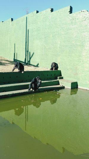 At the zoo / Game reserve EyeEm EyeEm Best Shots Poses Poseforthecamera 📷📷📷📷 😀