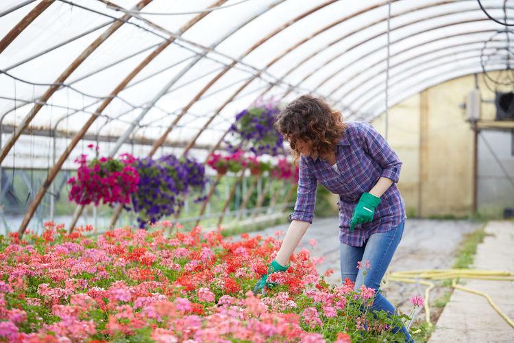 Beautiful woman working greenhouse